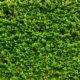 Techos verdes y Biofilia: Una oportunidad para conectarnos con la naturaleza