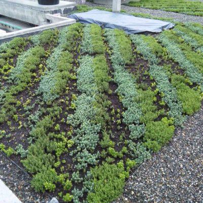 Imagen 1 proyecto carcel tulua - techo verde