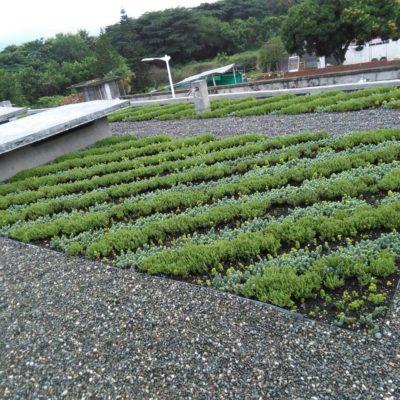 Imagen 2 proyecto carcel tulua - techo verde
