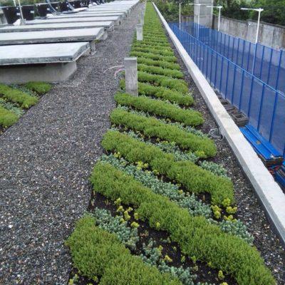 Imagen 4 proyecto carcel tulua - techo verde