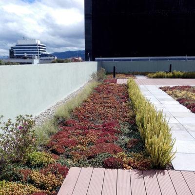 Imagen 2 proyecto emporium 96 - techo verde
